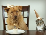 Birthday Dog and Cat