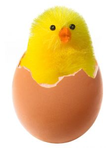 Chicken and the egg jumpstarting a life with a little spark to the